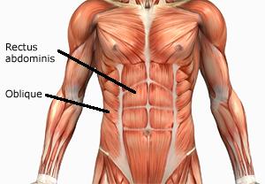 rectus-abdominis